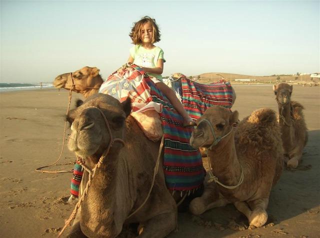 Camel Rides Mojacar